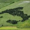 Testo unico forestale