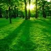 Manutentore del verde: standard professionale e formativo